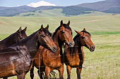 Four Handsome Horses Stock Photography