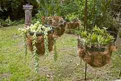 Four Hanging Flower Basket Arrangement in Garden Setting Royalty Free Stock Photo