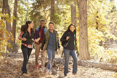 Four happy friends enjoy a hike in a forest, California, USA Royalty Free Stock Photography
