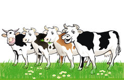 Four Happy Spotted Cows in Grass. Four happy smiling spotted cows in green grass and daisies royalty free illustration