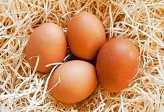 Free Four Heg Eggs Royalty Free Stock Photos - 18402868