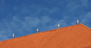 Four Herons. On an orange roof with a blue sky Royalty Free Stock Photos