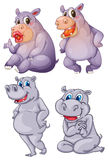 Four hippopotamus Royalty Free Stock Images