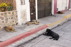 Four Homeless Dogs Stock Image