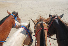Four Horses Stock Images