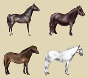 Four horses. Artistic illustration of a group of four horses Royalty Free Stock Photos