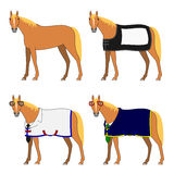 Four horses with and without cloth Royalty Free Stock Photos