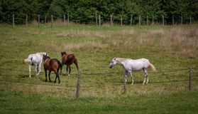 Four horses in a field stock photo