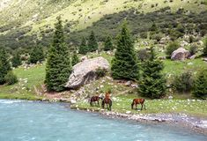 Four horses grazing at blue mountain river Stock Photo