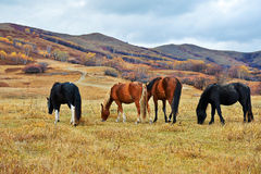 The four horses on the hillside Stock Image