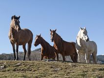 Four horses. In llanars, catalonia Royalty Free Stock Photos