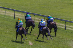 Four Horses Racing Rear Stock Photo