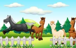 Four horses running the park. Illustration royalty free illustration