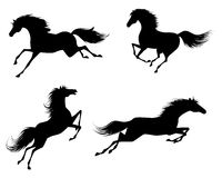 Four horses silhouettes Stock Image