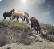 Four horses at the slope Royalty Free Stock Image