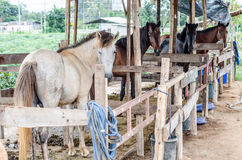 Four horses in a stable Royalty Free Stock Image
