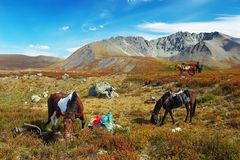 Four horses, two men, girl and mountains. Royalty Free Stock Photo