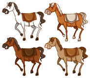 Four horses. On a white background Royalty Free Stock Image