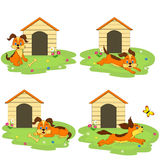 Four icon with dog  in front of his dog house Royalty Free Stock Image