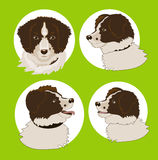Four images of the dog Royalty Free Stock Photo