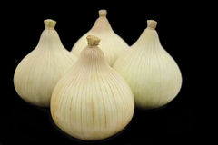 Four isolated onions Stock Images