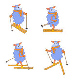 Four isolated sheep skiing Royalty Free Stock Photos