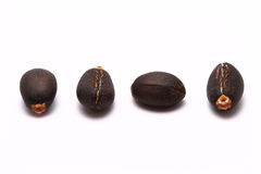 Four Jatropha Curcas Seeds. Four position Variety of Jatropha Curcas Seeds Royalty Free Stock Image