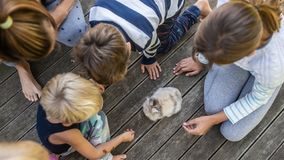 Four kids various age sitting outside on wooden terrace around a cute furry baby pet rabbit stock images