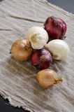 Four kind on onions and garlic. Red, yellow and white onion and garlic Royalty Free Stock Image