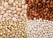 Four kinds of beans Royalty Free Stock Image