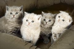 Four kitten Royalty Free Stock Image