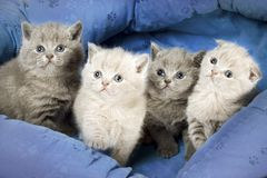 Four kitten Stock Images