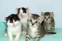 Four Kittens Stock Photo