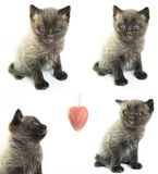 The four kittens Royalty Free Stock Photos