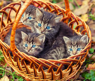 Four kittens in a basket Stock Image