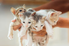 Four kittens royalty free stock photos