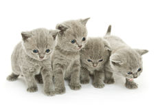 Four kittens over white Stock Photos