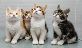Four kittens Royalty Free Stock Image