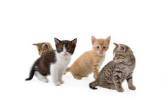 Four kittens sits on the floor. Isolated Stock Images