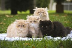 Four kittens sitting on the grass looking in front stock photos