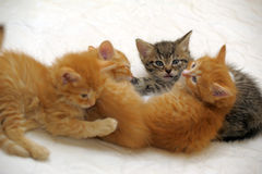 Four kittens together Stock Photo
