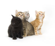 Four kittens on a white background Stock Photography
