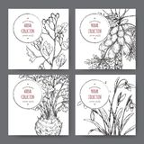Four labels with common hawthorn, celery, papaya tree and snowdrop sketch. Green apothecary series. Great for traditional medicine, or gardening royalty free illustration