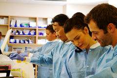 Four laboratory technicians processing specimens Royalty Free Stock Image