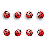 Four lady bugs with shadows and isolated on white Stock Photography