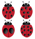 Four ladybugs Royalty Free Stock Photo