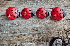 Four ladybugs Royalty Free Stock Image