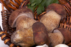 Four large mushrooms in basket Royalty Free Stock Photos