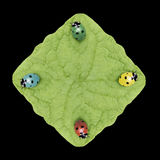 Four laydybugs. Four colored ladybug on a rectangle leaf Royalty Free Stock Photography