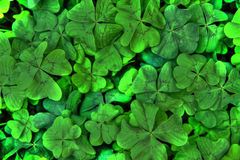 Four leaf background Royalty Free Stock Photography